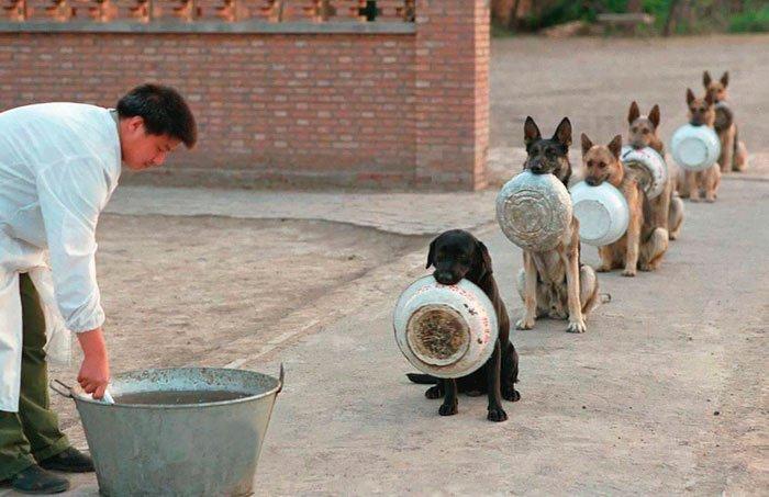 perros-policia-china-esperan-comida-2