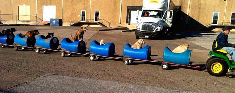 anciano-tren-para-perros-2