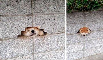 Este perro está desesperadamente decidido a decirte Hola. A cualquier precio.