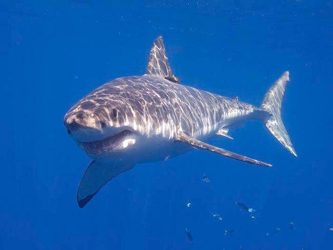 selfies-vs-tiburones-4