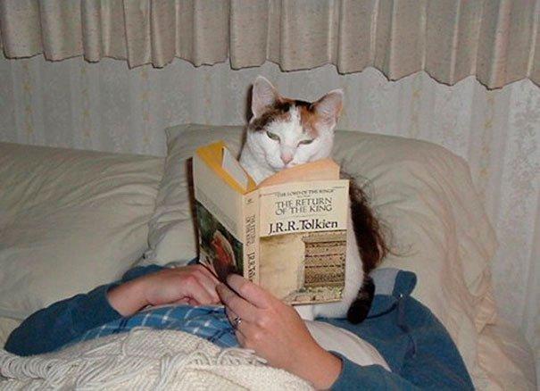 gatos-espacio-personal-10