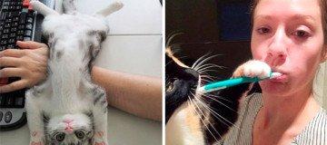 15 Gatos que no se preocupan, en absoluto, por tu espacio personal.