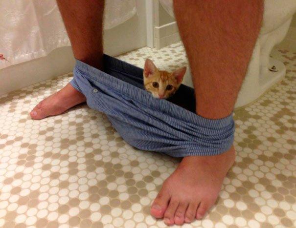 gatos-espacio-personal-4