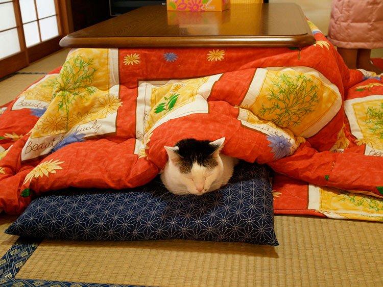 kotatsu-mesa-camilla-8