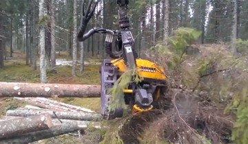 Leñadores tened cuidado – Estas máquinas pronto os acabarán robando el trabajo.