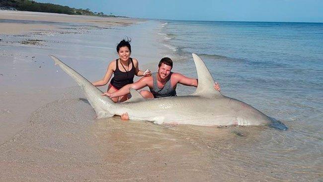 pescar-tiburones-manos-1