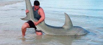 A este autraliano le encanta pescar tiburones… Con sus propias manos.