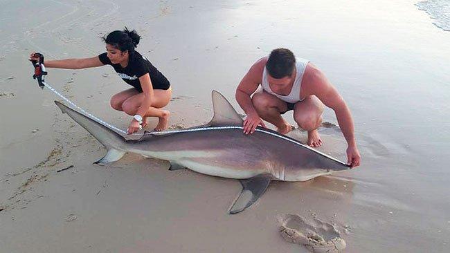 pescar-tiburones-manos-6