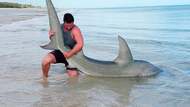 pescar-tiburones-manos-7