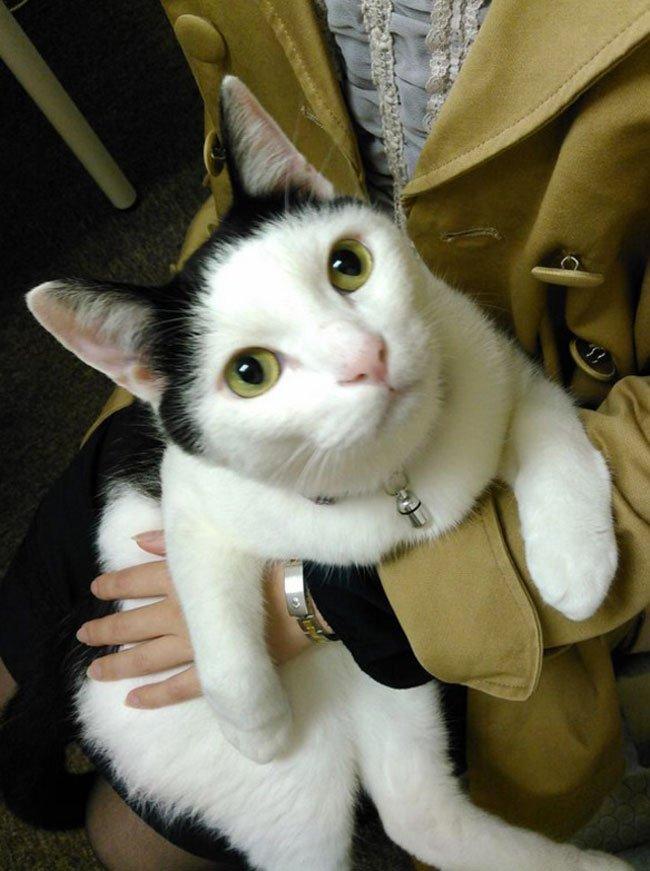empresa-adopta-gatos-oficina-10