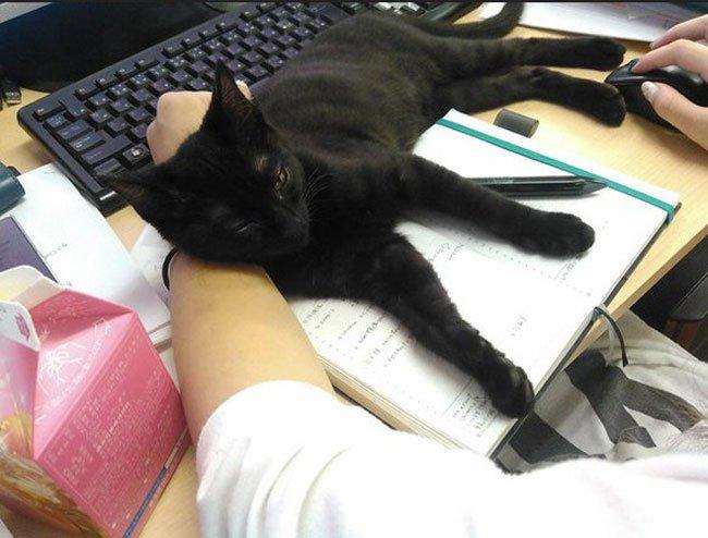 empresa-adopta-gatos-oficina-2
