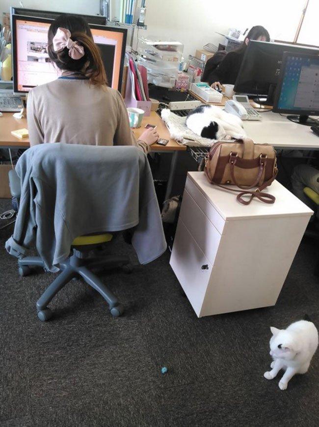 empresa-adopta-gatos-oficina-3