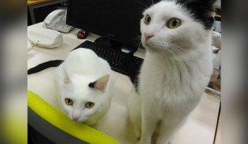 Una empresa adopta 9 gatos y sus trabajadores dan saltos de alegría.