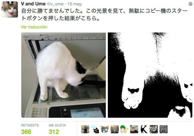 empresa-adopta-gatos-oficina-4