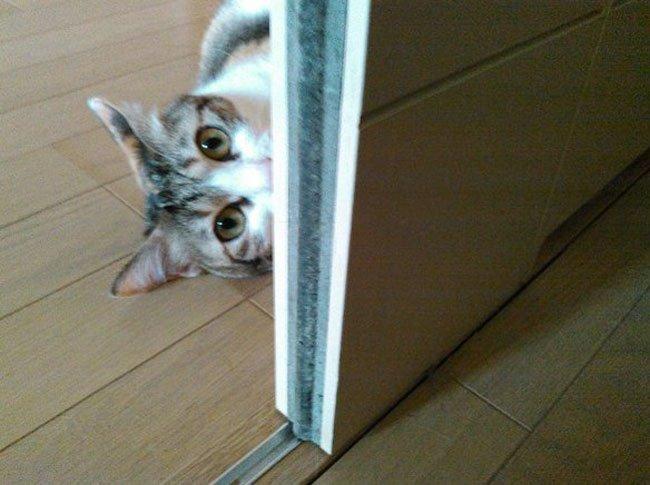 empresa-adopta-gatos-oficina-5