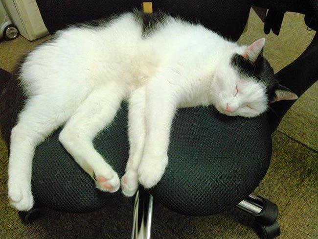 empresa-adopta-gatos-oficina-6
