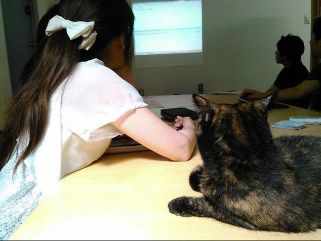 empresa-adopta-gatos-oficina-8