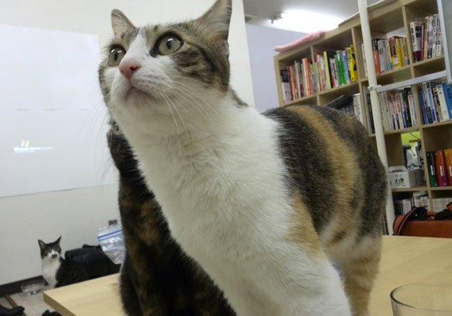 empresa-adopta-gatos-oficina-9