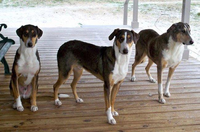 hombre-clona-perro-2