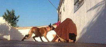 Cuando este perro se da cuenta de Qué hay bajo la manta, no puede aguantar su alegría.