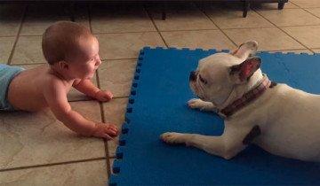 Este es el perro niñera favorito de este bebé… y ahora entenderás por qué.