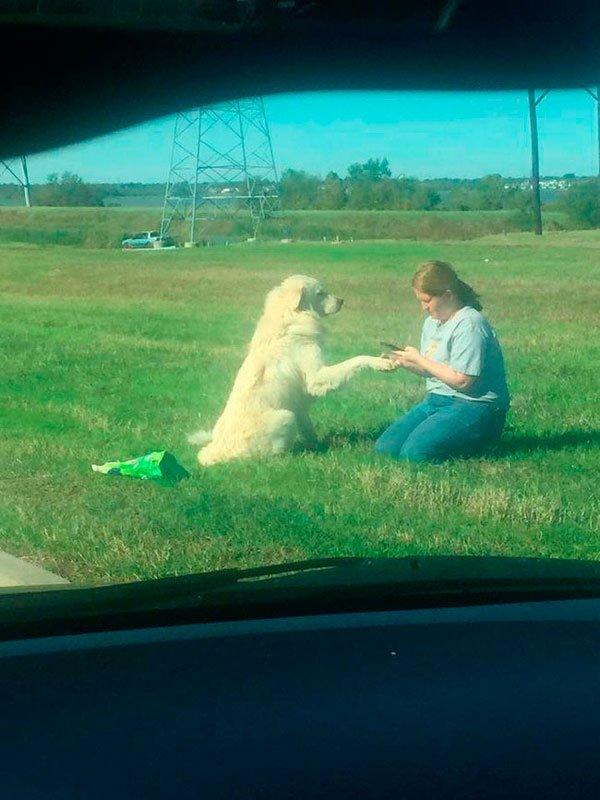 perro-lealtad-3