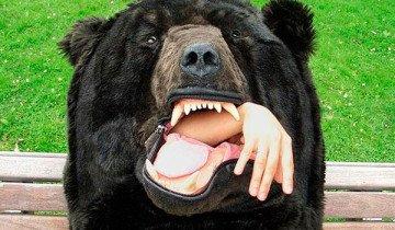 Nadie se atreverá a despertarte con este saco de dormir. Quizá sólo otro oso.