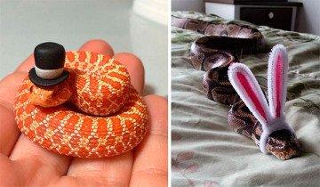 Si tienes miedo a las serpientes, tranquilo, sólo necesitan un sombrero para ser adorables.